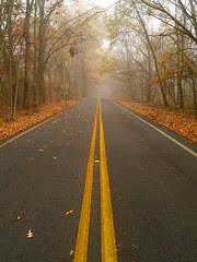Road Through Burns Park