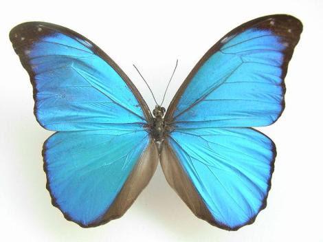 Por: borboleta.org