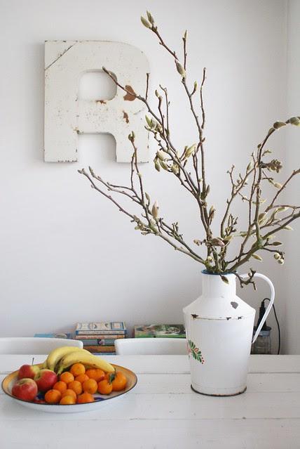magnolia branches