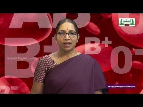 12th சத்துணவியல் பரிந்துரைக்கப்பட்ட ஊட்டச்சத்து பாடம் 1 Kalvi TV