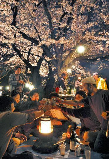 """Hanami -- The traditional Japanese custom of enjoying the beauty of flowers. Young people make merry under the sakura (cherry blossoms) late into the evening.""  << What a beautiful word - am impressed that words exist to describe the joy in an event.  I hope you all have Hanami and make some merry today :)"