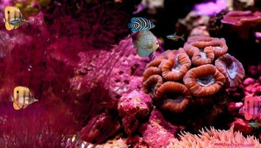 Screensaver Aquarium Gratuit à Télécharger