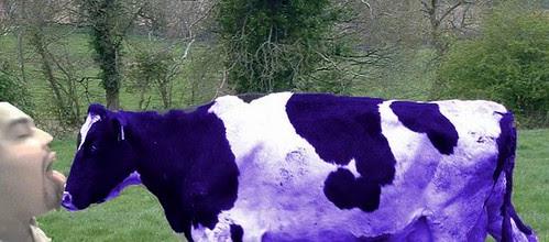 Vacas moradas en Monterrey :P