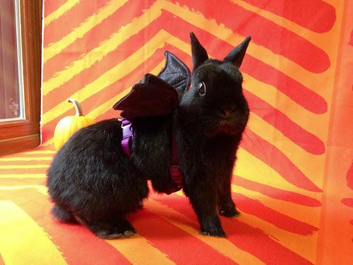 George Bat Bunny by Jeni Baker