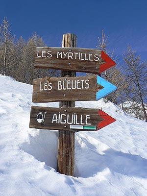myrtilles et bleuets.jpg