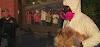 140 perritos son rescatados después de que una pareja acaparadora de animales fuera denunciada