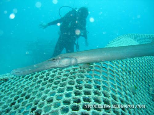 long fish