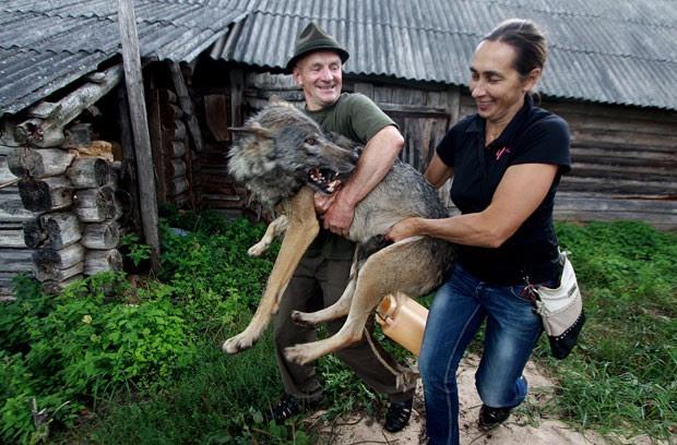 Oleg, um guarda florestal, levou alguns filhotes para sua casa em 2009 (Foto: Sergei Gapon/AFP)