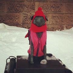 #otaru fire dog bunko #hokkaido #japan #travel