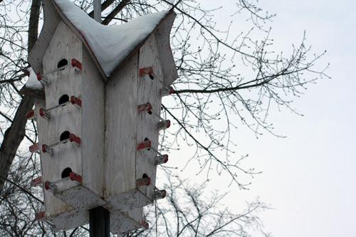 birdie condo