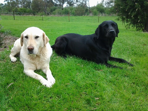 Milly and Sedge