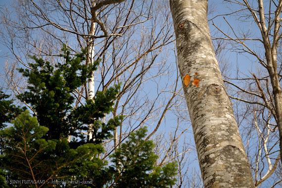 20130405-DSC_9941-forest