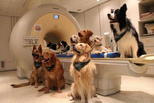 perros en resonancia