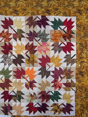 Mini-Maple Leaves - Border Audition