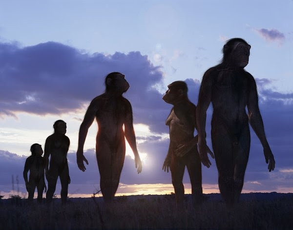 Australopithecus africanus. 2.6 million years ago.
