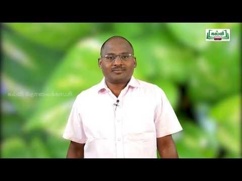 NEET Botany தாவரவியல் தாவர உள்ளமைப்பியல் Kalvi TV