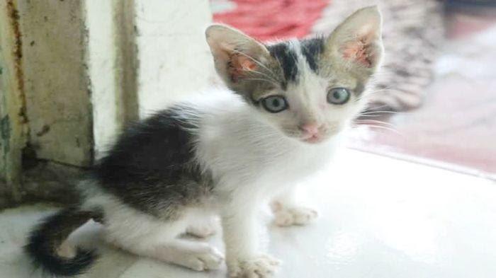 Download 100+  Gambar Kucing Lagi Makan Paling Lucu