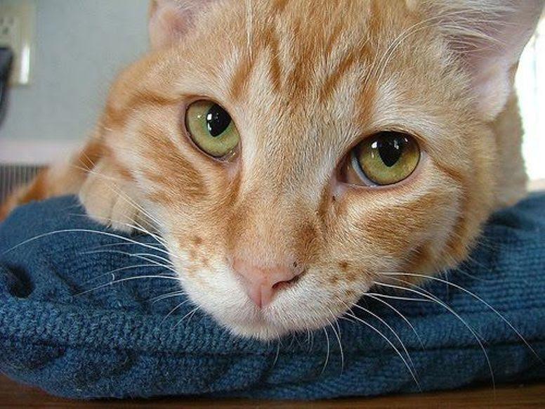 Download 93+  Gambar Kucing Lucu Warna Kuning Paling Imut HD