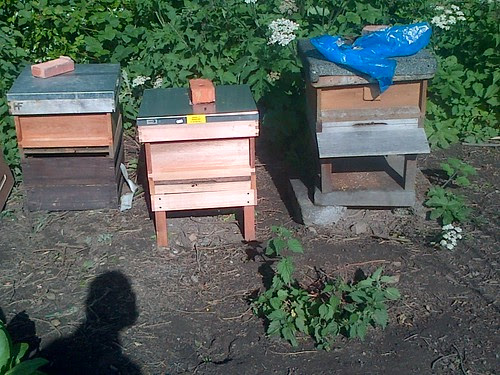 bee hives June 13 2
