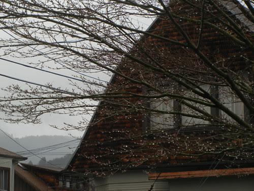 DSCN8068 _ After the Rain