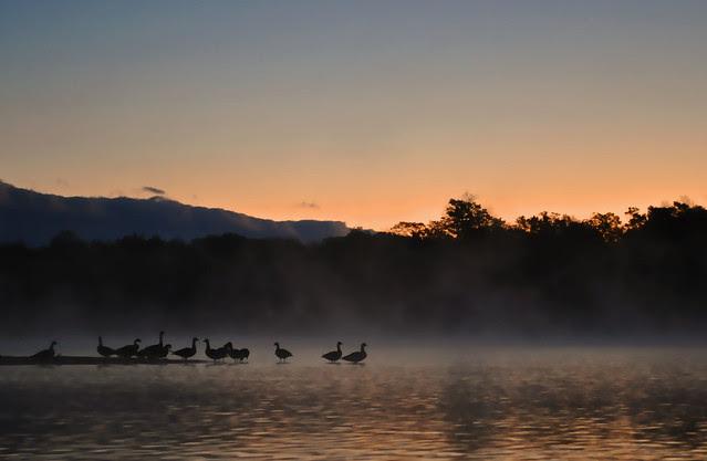 Dawn Gathering