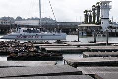 See Lions at Fisherman's Wharf