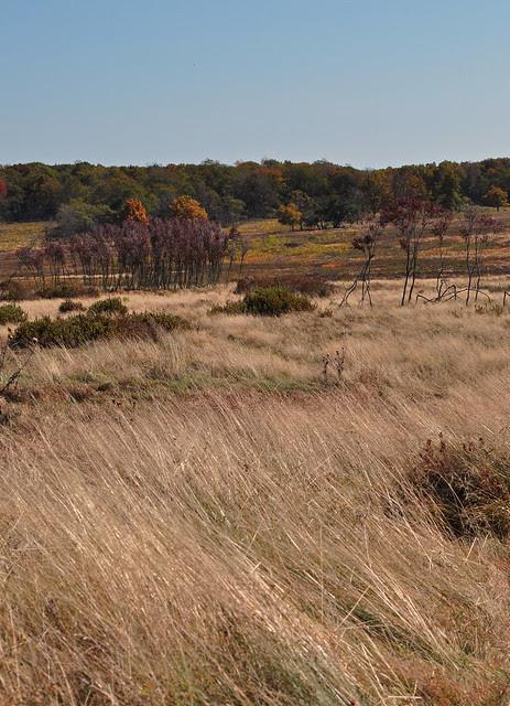 Big Meadows (4)