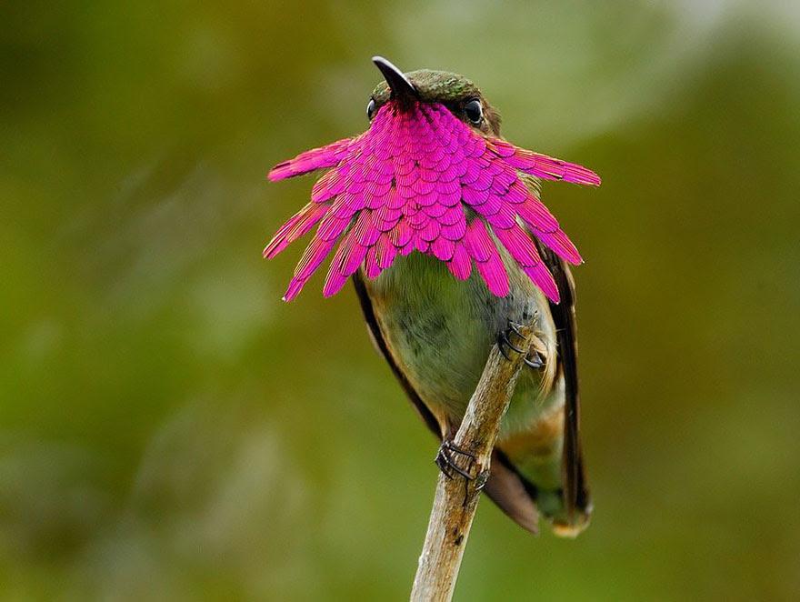 cute-beautiful-hummingbird-photography-5