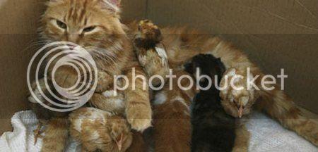 Kucing dan Anak Ayam