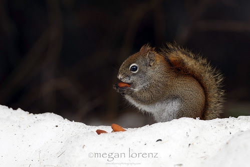 Mmmm...Nuts! by Megan Lorenz