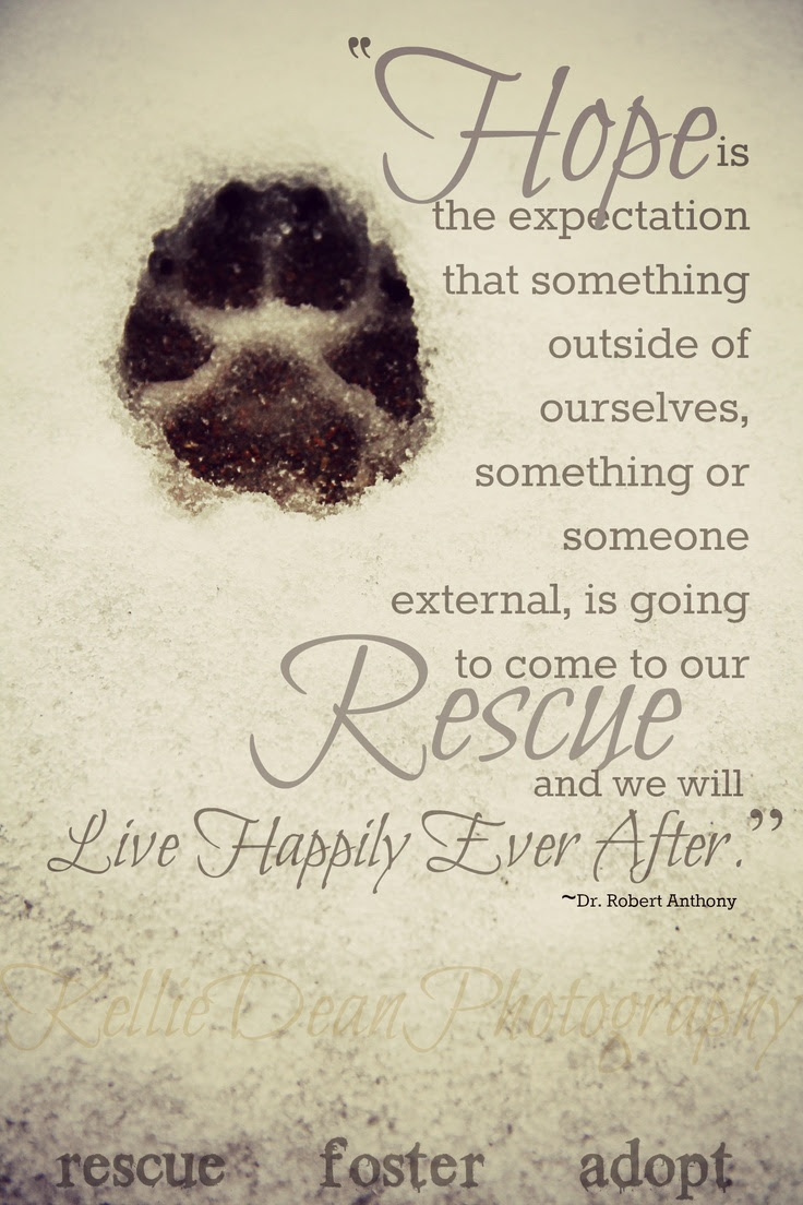 Quotes About Rescued 140 Quotes