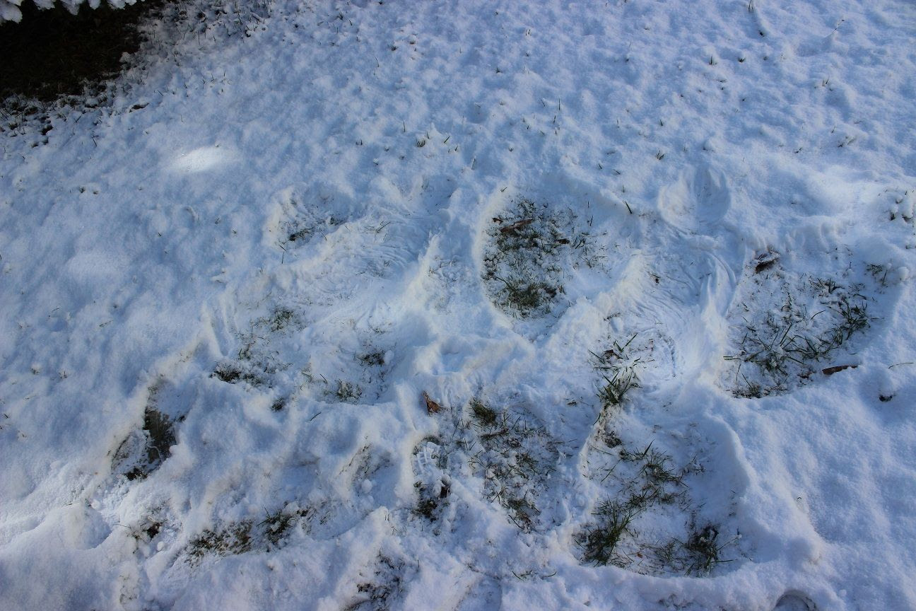 photo snow41_zps9ea8279a.jpg