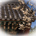 Tile roof with white blossoms.jpg
