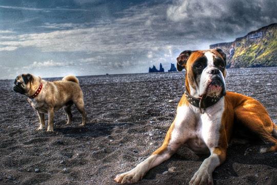 A dogs dream by Pétur Gunnarsson