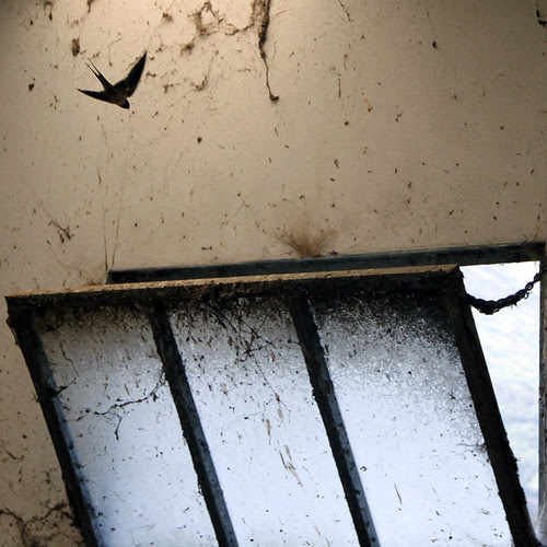 SWALLOW EMERGENCY WINDOW by juanluisgx