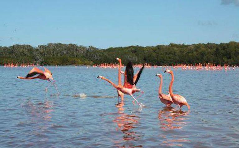 Flamingos-2-768x477