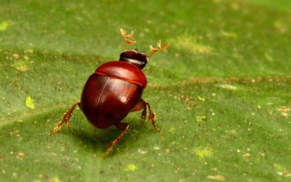 7 espécies de animais incríveis descobertas em 2013