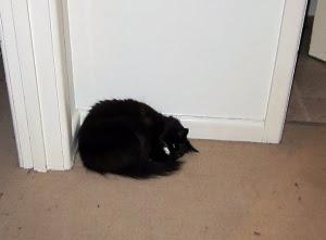 ball-corner-cat1