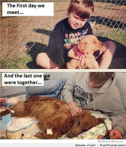 Sayings About Boy And His Dog Quotes