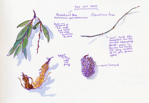 February 2014: Treasures by apple-pine