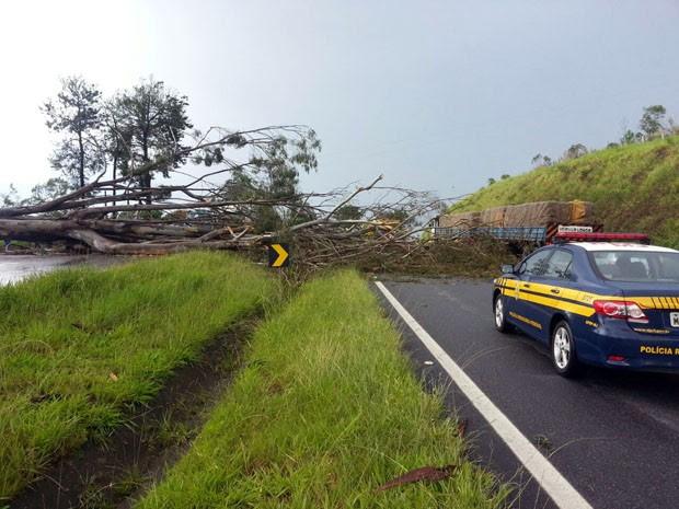 Ventos e chuva derrubaram árvore sobre pistas na Fernão Dias, em Pouso Alegre (Foto: Polícia Rodoviária Federal)