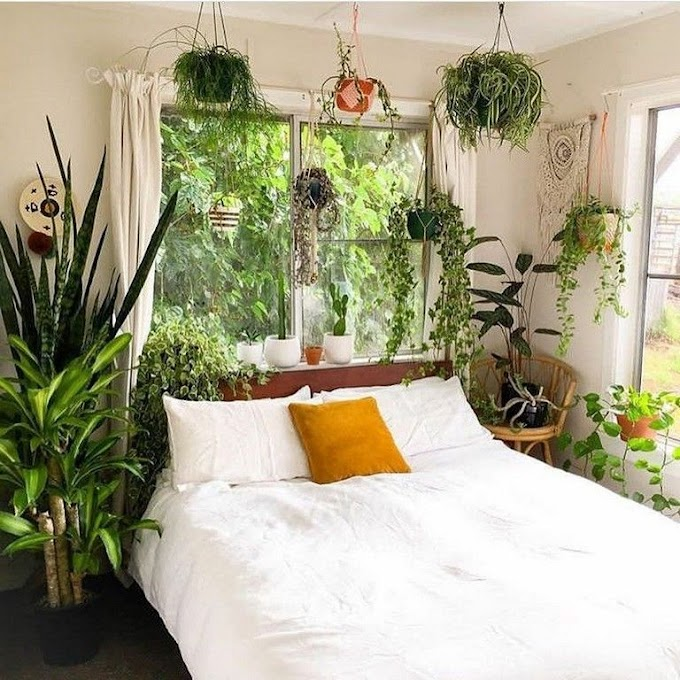Bedroom Decorating Ideas With Plants
