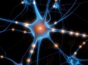 Alzheimer: la chiave per curarlo sarebbe una proteina del cervello