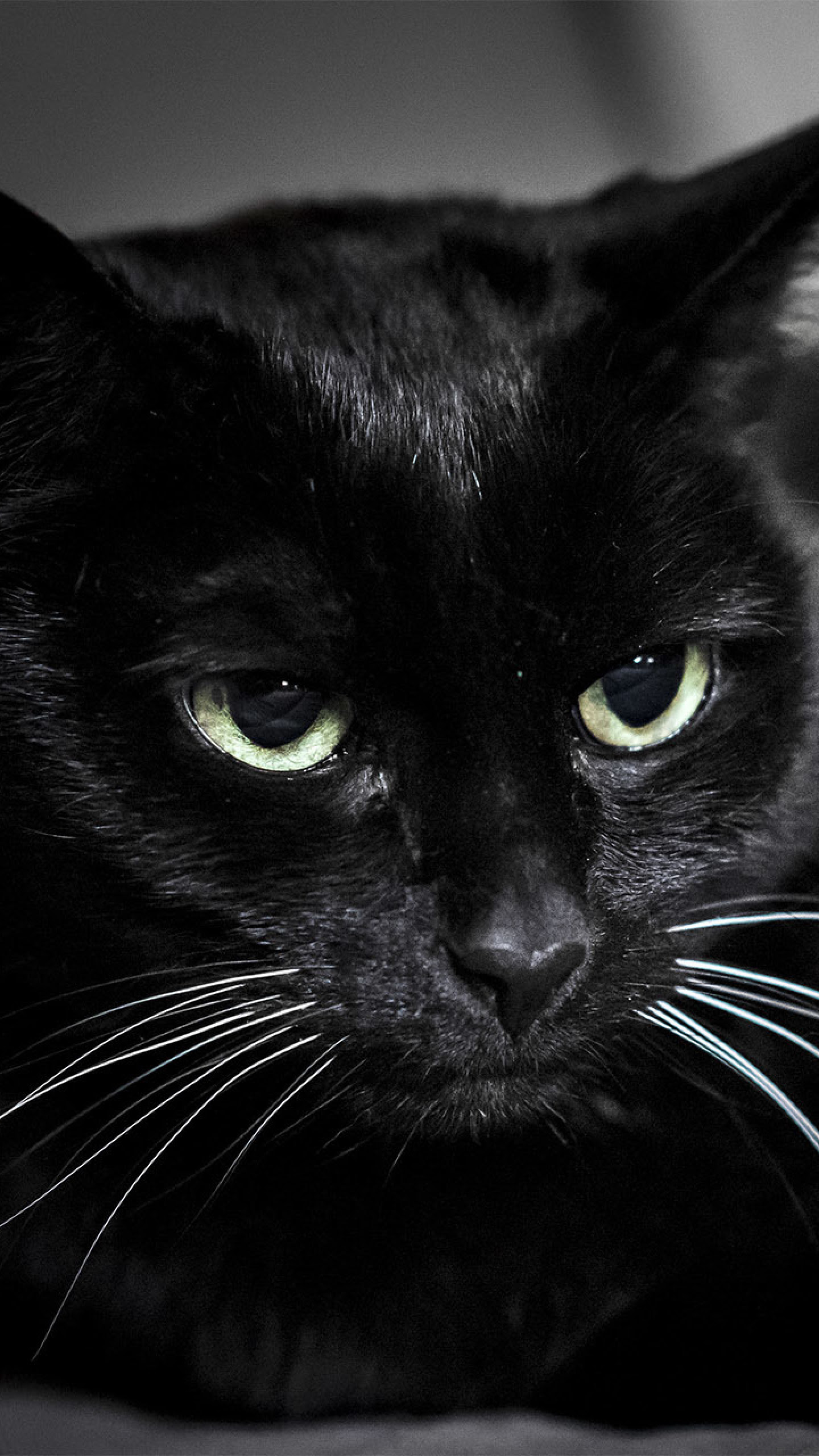 Black Cat Background 65 Images