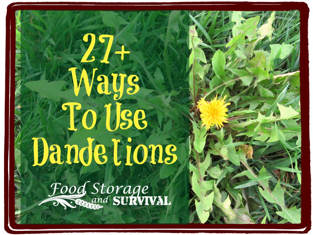 Hold off on the weed spray! Make dandelions your friends with these 27+ ways to use them!