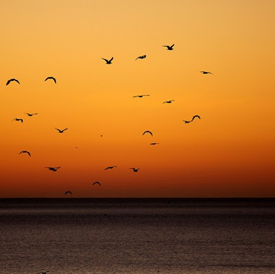 dawn - with birds