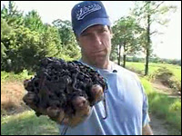 Mike Rowe works as a worm rancher for an episode of 'Dirty Work'