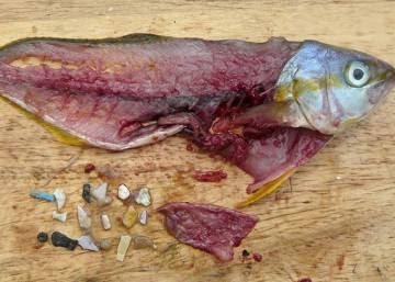 Tus exfoliantes aniquilan a los peces
