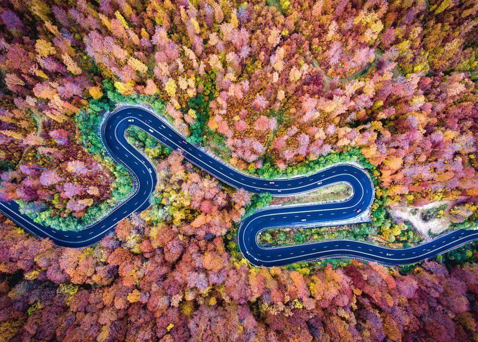 Uma imagem aérea de uma estrada em meio a árvores coloridas de outono
