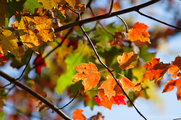 autumn leaves, mixed colors